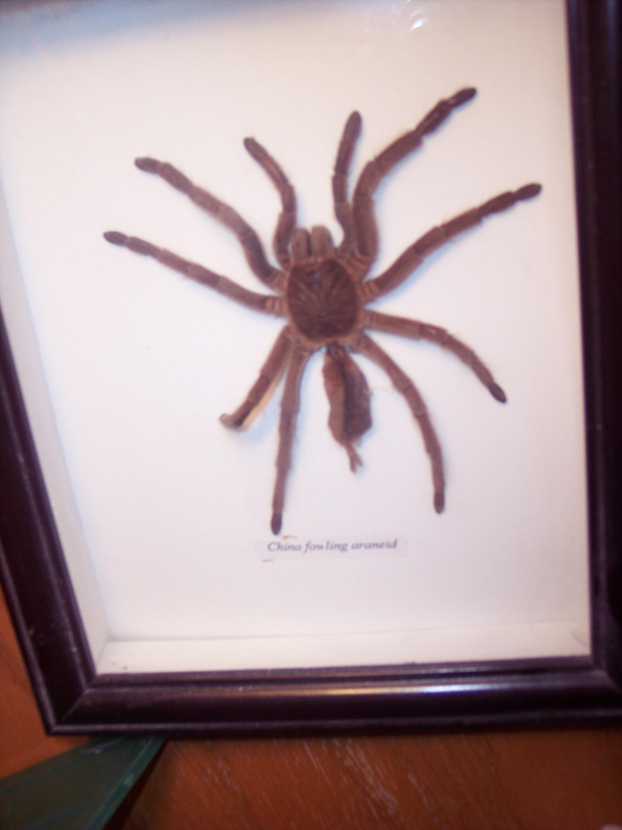 Stoker, the spider